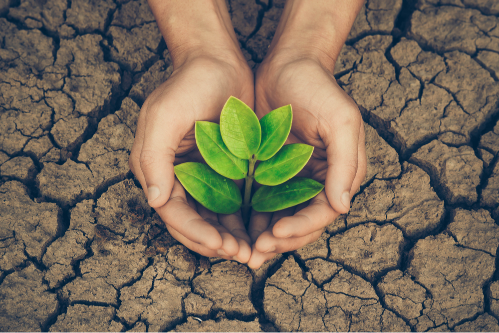 Woman's hands cupped around a green plant emerging out of cracked earth.