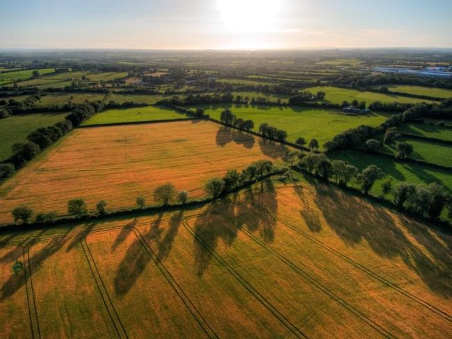 Grain fields near Limerick.